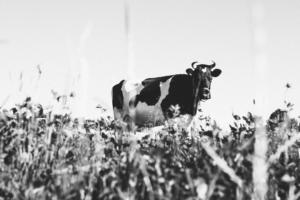 Intolérance au lactose, allergie au lait, maux de ventre... faire le point sur les produits laitiers
